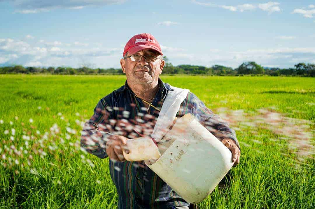 farmer / eliasfalla / pixabay