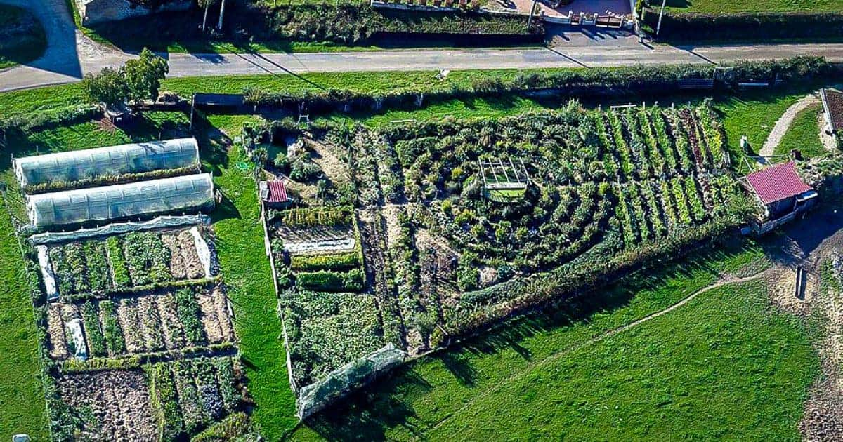 Top 11 Online Permaculture Design Courses