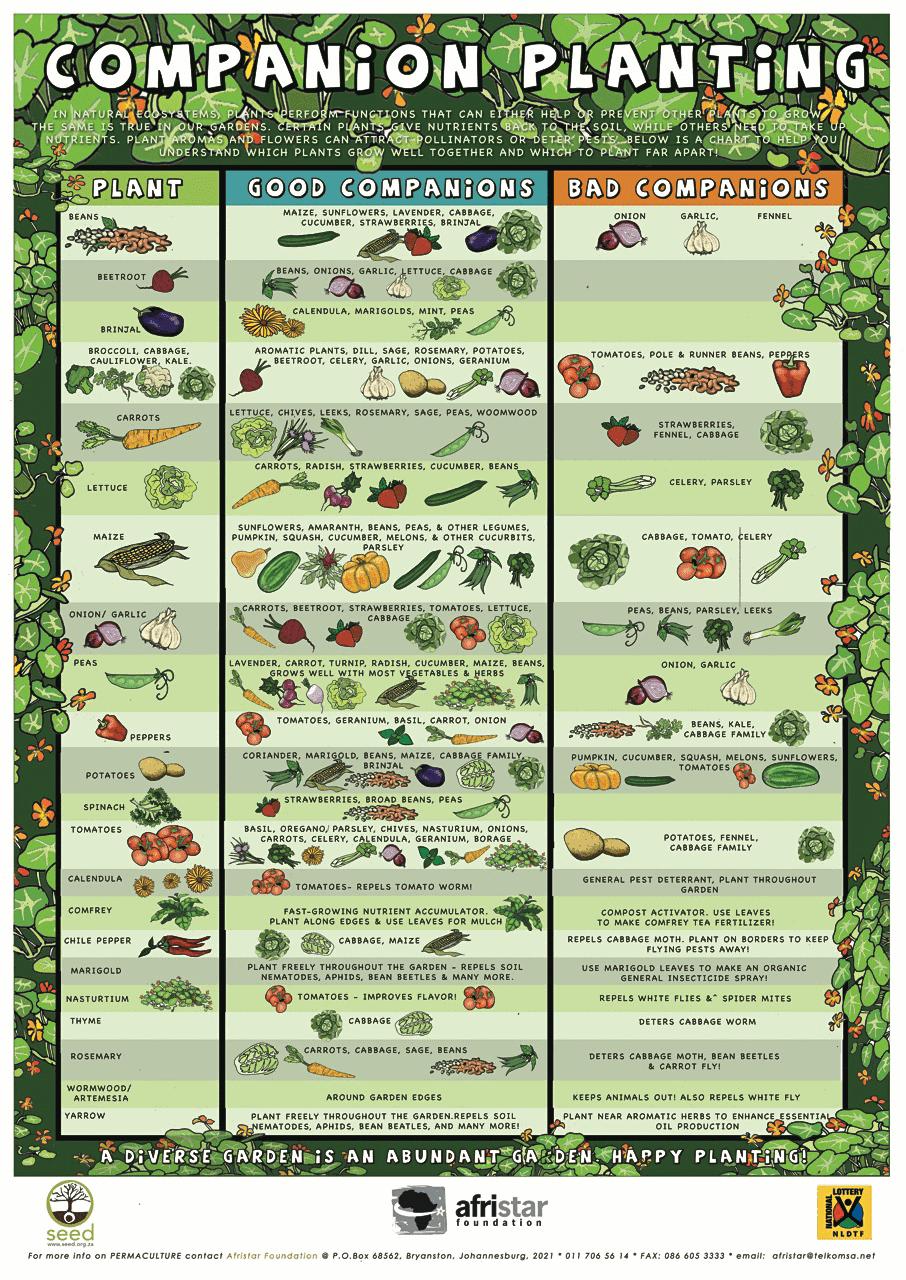 Companion Planting Chart / Afristar