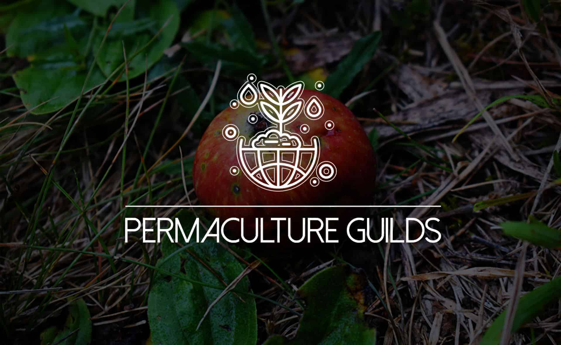 """Featured image for """"If You Guild It, They Will Come: How to Grow a Permaculture Food Forest"""""""