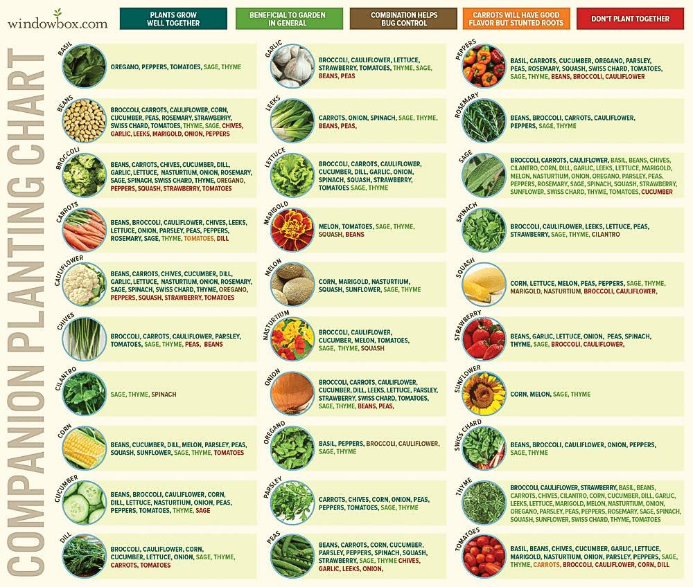 Companion Planting Chart / Windowbox