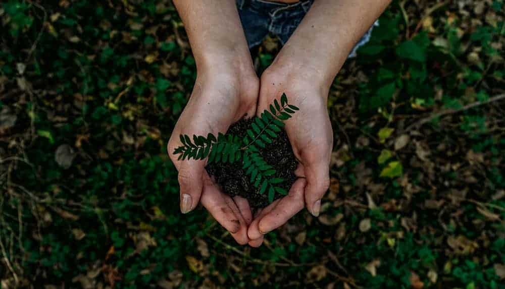 handful of soil / Noah Buscher / Unsplash
