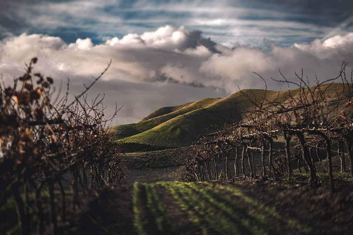 California vineyard / Tim Mossholder / Unsplash
