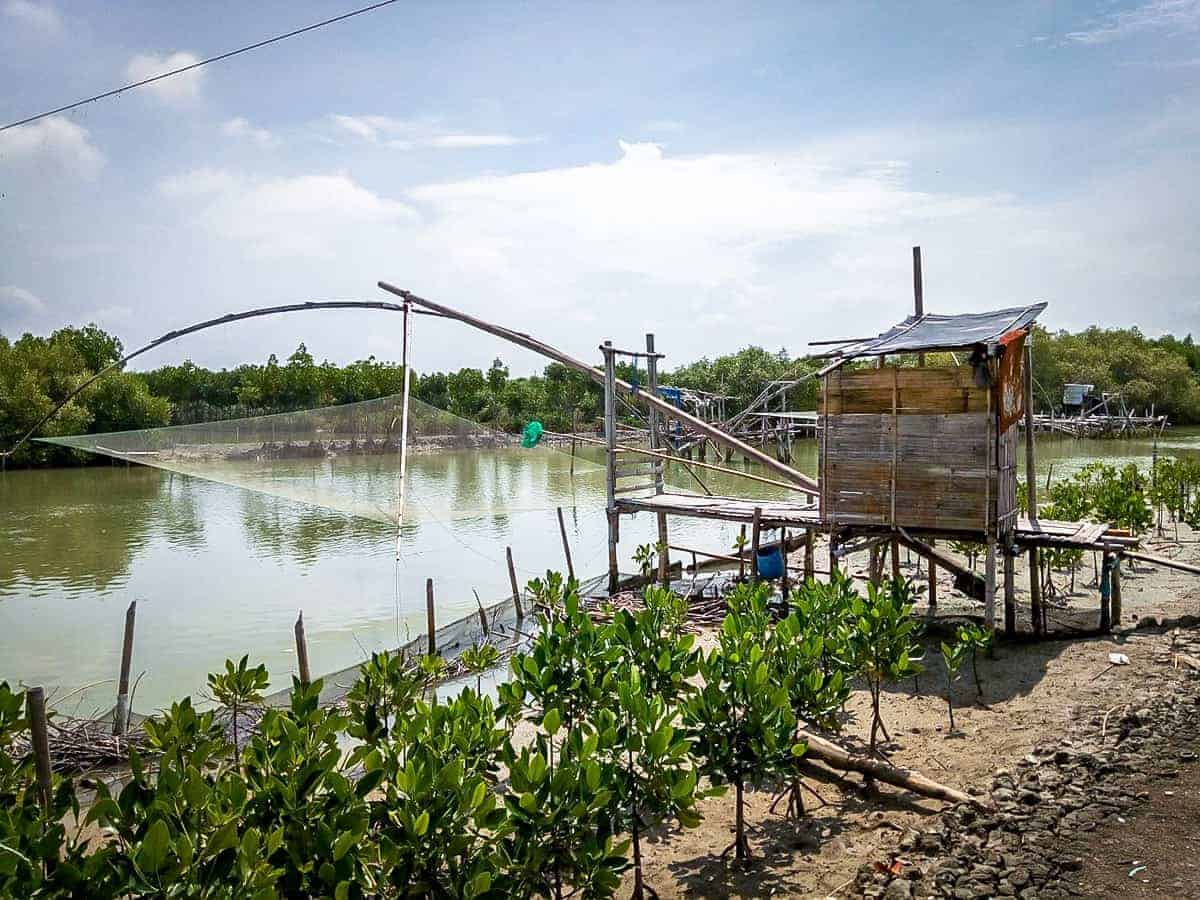 Mangrove restoration and fish farming / Desiree Driesenaar