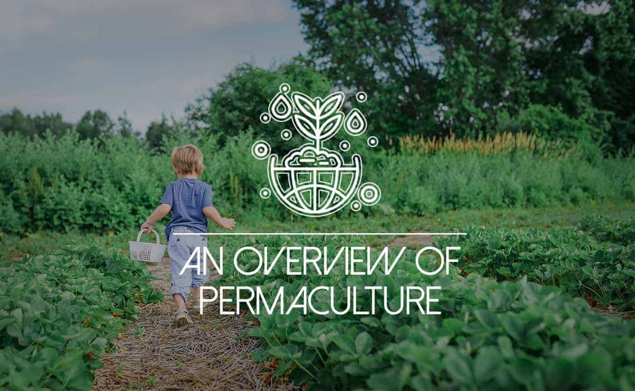 """Featured image for """"Permaculture Gardening: a Sustainable Arrangement"""""""