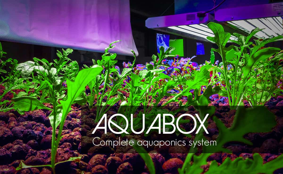 """Featured image for """"Why Everyone Wants the AquaBox: Complete Aquaponics Kit"""""""